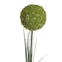 Алиум зеленый 80 см (24), Ограниченно годен