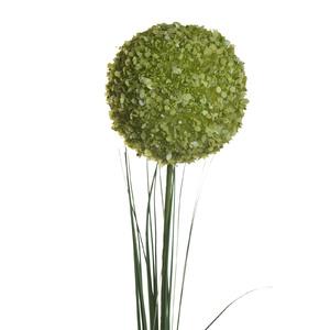 Купить Алиум зеленый 80 см (24), Ограниченно годен