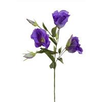 Лизиантус фиолетовый, 78см (36)