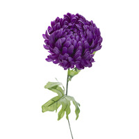 Хризантема фиолетовая 63 см (24)