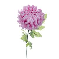 Хризантема розовая 63 см (24)