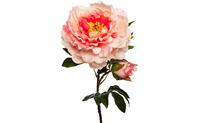 Пион нежно-розовый, 67см (24)