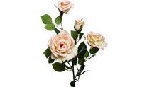 Роза чайная 80см
