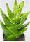 Кактус в горшочке, зеленый 13х5,5х5,5, У