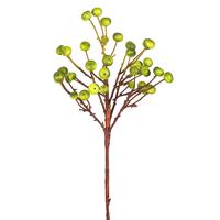 Ветка с ягодами, зеленая