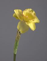 Нарцисс желтый 48 см 12/144
