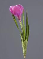 Крокус розовый 20 см 12/144