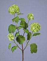 Калина бульдонеж (Вибурнум) (4 соцветия) , У