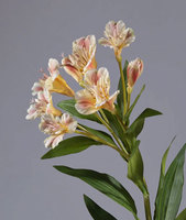 Альстромерия золотисто-розовая 72 см, 6 цв 2бут 12/72