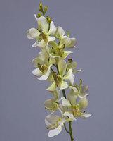 Орхидея Дендробиум нежно-лаймовая , У