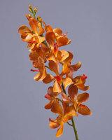 Орхидея Дендробиум золотисто-оранжевая, У