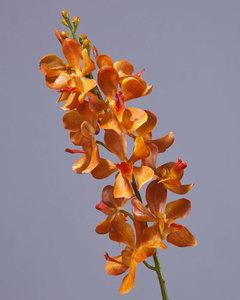 Купить Орхидея Дендробиум золотисто-оранжевая, У