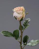 Роза Эсперанса Мидл бледно-розвая с лаймом