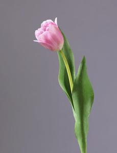 Купить Тюльпан Даймонд нежно-розовый