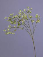 Ветка развесистая с мини-ягодками нежно-зеленая
