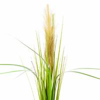 Пампасная трава, 70см, салатовый