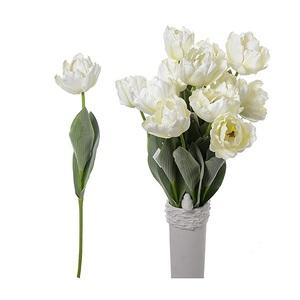 Купить Тюльпан белый