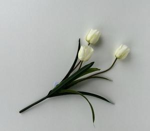 Купить Тюльпан