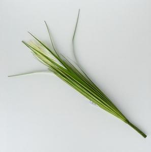 Купить Пампасная трава, 70см