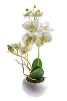 Орхидея в горшке, кремовый