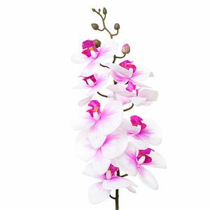 Купить Орхидея розовая