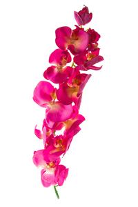 Купить Орхидея, лиловая